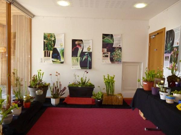 plantes carnivores insectivores association alsacienne plante carnivore rossolis. Black Bedroom Furniture Sets. Home Design Ideas