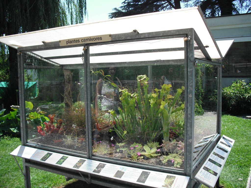 Terrarium plantes carnivores
